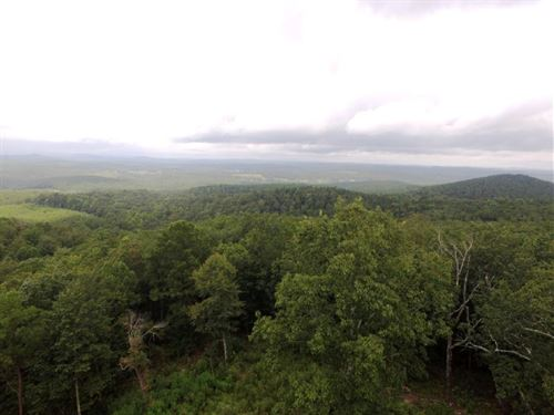 118 Acres Excellent Hunting Land : Ashland : Clay County : Alabama