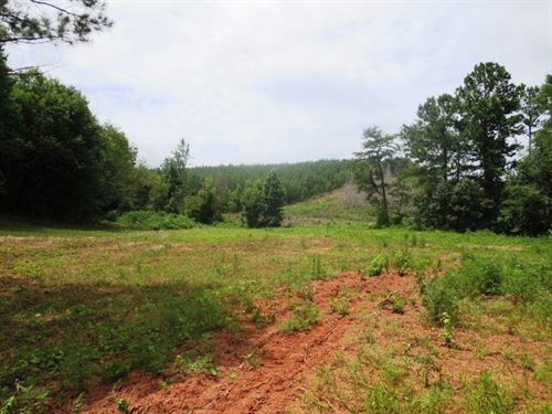 Excellent Hunting Land In Clay Co : Ashland : Clay County : Alabama