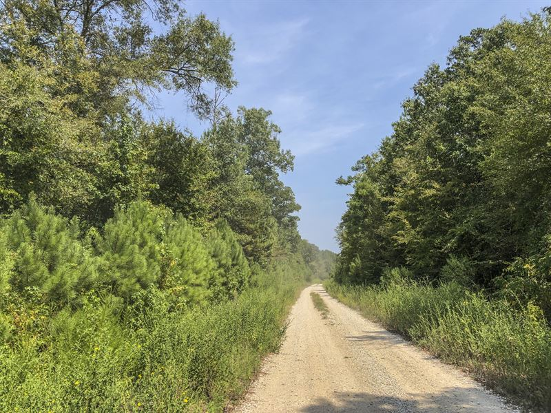 67 Ac Off Spring Ridge Rd : Nacogdoches : San Augustine County : Texas