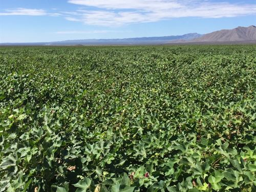 Farming Land For Sale : Mina Los Lamentos : Mexico