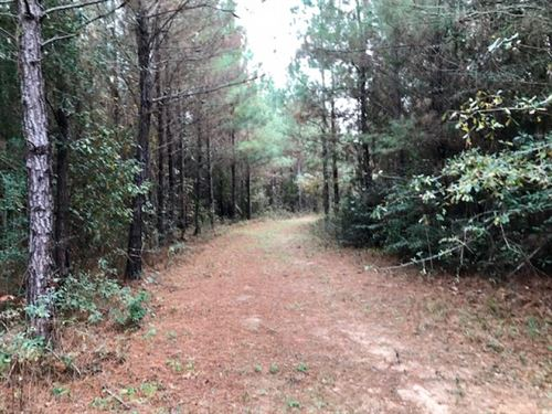 196 Acre Timberland And Hunting Pro : Magnolia : Pike County : Mississippi
