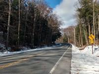 Corinth Forest : Corinth : Saratoga County : New York