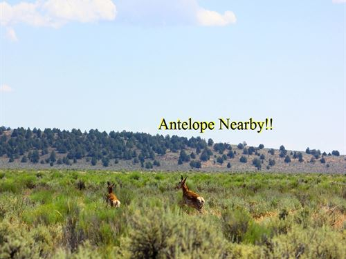 Excellent 20.4 Ac, Power On The Lot : Termo : Lassen County : California