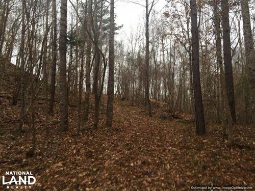 Hunting Close to Hillside Refuge : Lexington : Holmes County : Mississippi