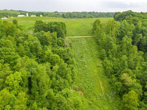 Gravel Lick Rd, 134 Acres : Port Washington : Tuscarawas County : Ohio