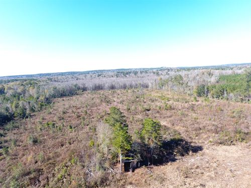 45 +/- Acres Hazelet Bridge Rd : Red Level : Covington County : Alabama