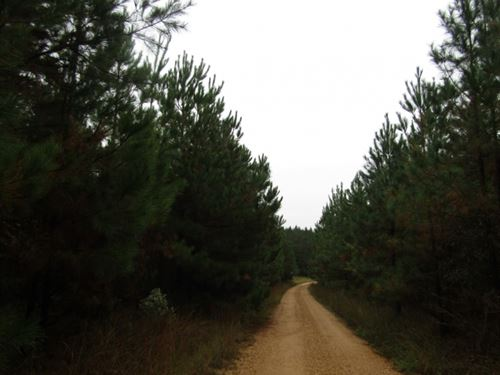 154.5 Acres In Lincoln County In Bo : Bogue Chitto : Lincoln County : Mississippi