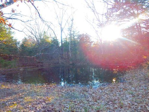 Land For Sale Close to Lake : Bakersfield : Ozark County : Missouri