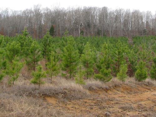 Land Tn, Creek, Field, Hunting : Saltillo : Hardin County : Tennessee