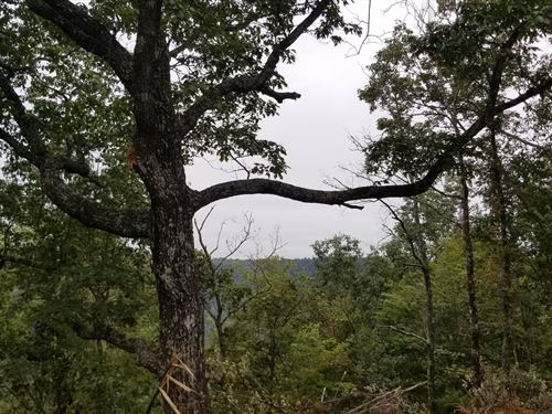 8.84+/- Acs Mtn Views Near Sewanee : South Pittsburg : Marion County : Tennessee