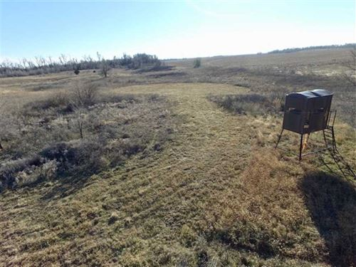 85 Acres of Excellent Hunting : Byers : Pratt County : Kansas