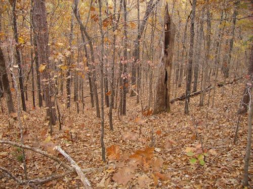 Wooded Land For Sale In Licking, Mo : Licking : Texas County : Missouri