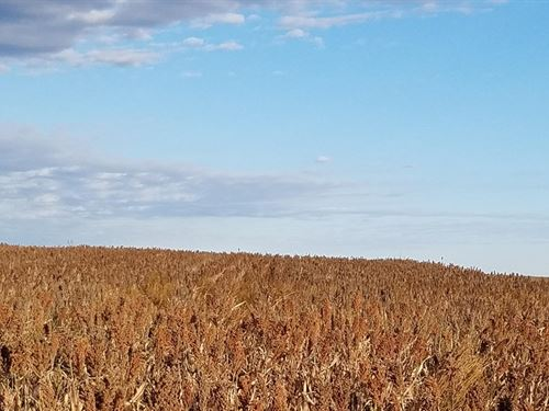 Highly Productive Farm Land : Mount Hope : Reno County : Kansas