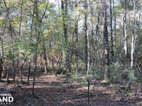 Blackwater River Headwaters Hunting : Bradley : Escambia County : Alabama