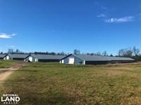 Williston Poultry Farm : Williston : Barnwell County : South Carolina