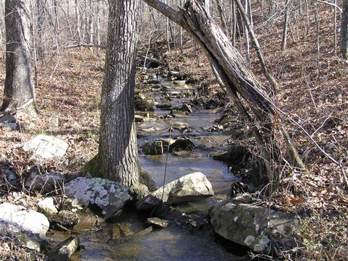 Creek, Woods, Setup For A Camper : Dunlap : Sequatchie County : Tennessee