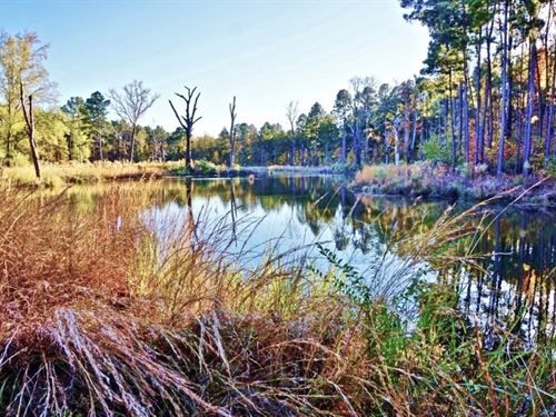 52 Acre Woods/Pasture / Pond : Shreveport : Caddo Parish : Louisiana