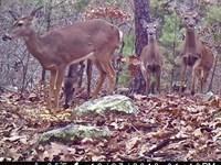 Oklahoma Hunting Land For Sale : Yanush : Latimer County : Oklahoma