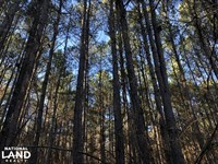 Coffeeville Timber Income : Coffeeville : Yalobusha County : Mississippi