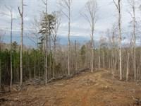 Land Tn, Creek, Hunting, Owner : Savannah : Hardin County : Tennessee