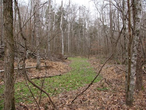 Land Tn, Creek, Hunting, Owner : Savannah : Hardin County : Tennessee