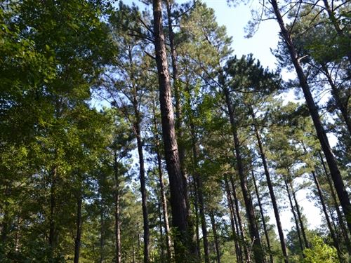 Bellamy Tract 2 : Swainsboro : Emanuel County : Georgia