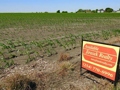 20 Acres, Fm 1444, Ben Arnold : Ben Arnold : Milam County : Texas