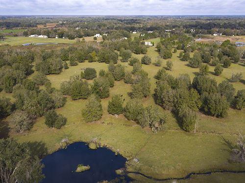 Todd Acres Lane 42 Acres : Plant City : Hillsborough County : Florida