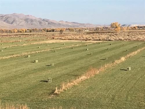 Home & 40 Acre Water Righted Ranch : Yerington : Lyon County : Nevada