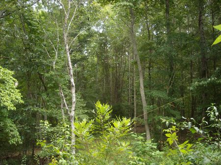 9.77 Ac. Whitestone Community : Spartanburg : South Carolina