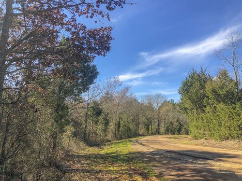 91 Acres Cr 4221 : Jacksonville : Cherokee County : Texas