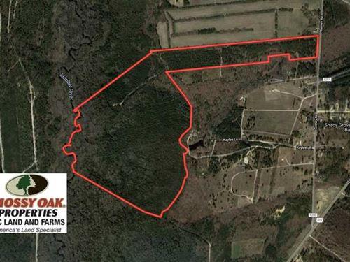139 Acres of Timber And Hunting LA : Raeford : Hoke County : North Carolina