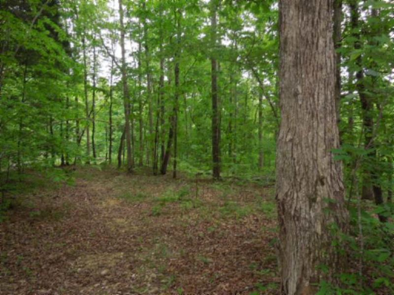 156.13Ac Totally Wooded, Ideal Hunt : Celina : Clay County : Tennessee