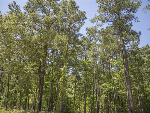 6 Ac Wilderness Estates Tr 4-7 : Point Blank : San Jacinto County : Texas