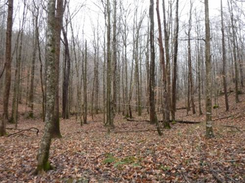 72.71Ac, Creek, Building Sites : Jamestown : Fentress County : Tennessee