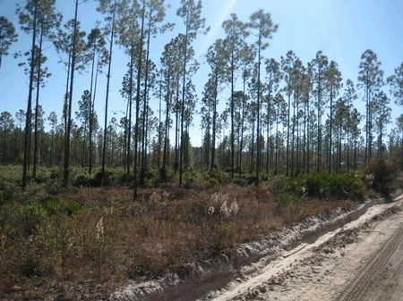 1,438 (+/-) Acres With Good Access : Middleburg : Clay County : Florida