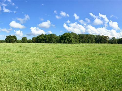 10+/- Acres Of Residential Homesite : Lakeland : Polk County : Florida