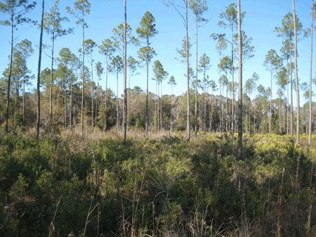 In The Woods & Close To Town : Middleburg : Clay County : Florida