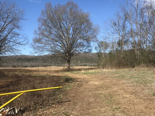259+/- Acres In Jackson County : Hollywood : Jackson County : Alabama