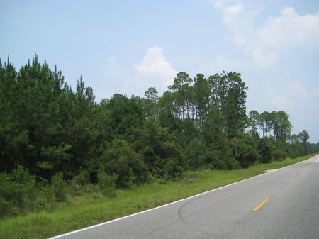 Prime Hunting Close To Gainesville : Hawthorne : Alachua County : Florida