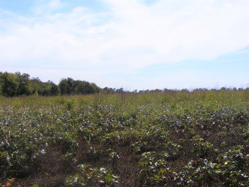 Farm Land Investment Property Wolfe : Wolfe City : Hunt County : Texas