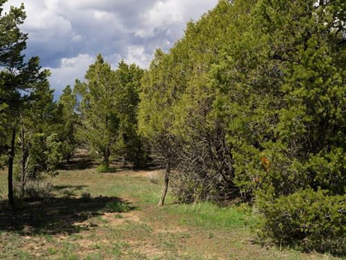 Perfect Place Colorado Dream Home : Mancos : Montezuma County : Colorado