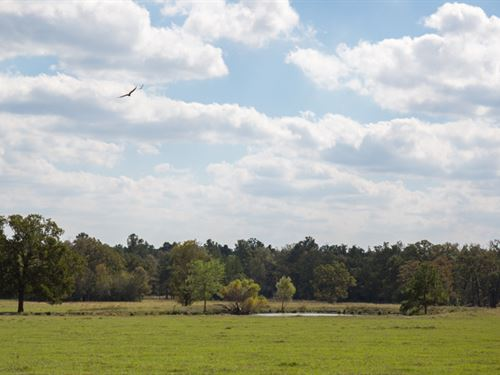 117 Acres Fm 3179 : Huntsville : Walker County : Texas