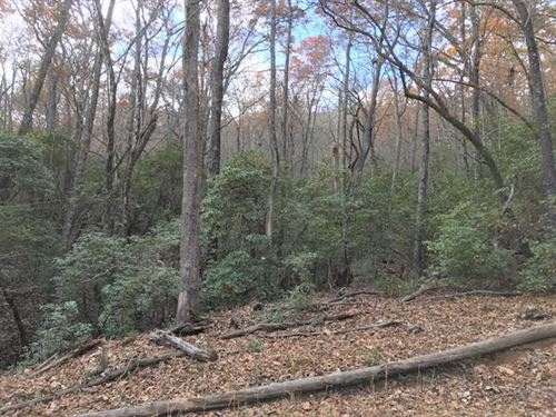 78 Acres of Timber And Development : Mills River : Henderson County : North Carolina