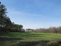 105.38 Acres On Paved Wilmar Road : Vanceboro : Craven County : North Carolina