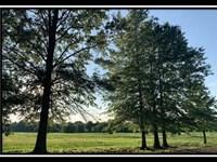 Beautiful Estate Home Site : Sunbury : Delaware County : Ohio