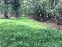 59+/- Acres Land In Bloomsburg : Bloomsburg : Columbia County : Pennsylvania
