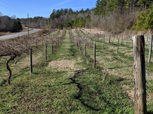 Trickum Valley Vineyard : Heflin : Cleburne County : Alabama