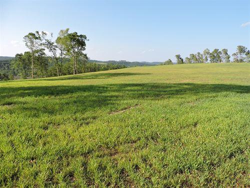 Large Acreage Timberland Property : Harrison : Boone County : Arkansas