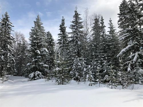 5 Acre Property to Build Your Dream : Sandpoint : Bonner County : Idaho